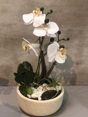 Orquídea Fanerosis Blanca